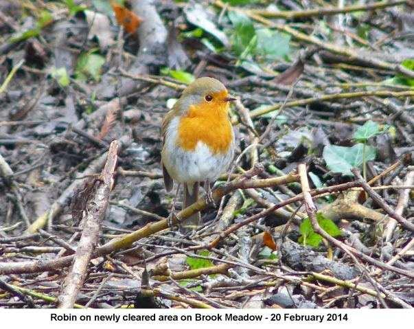 work day robin