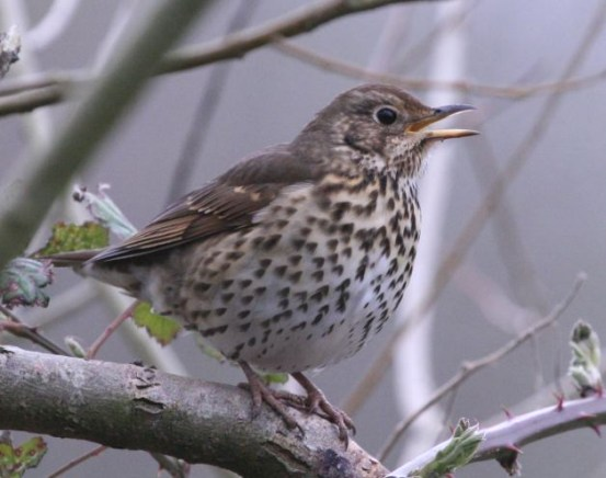 the background and commentary on the darkling thrush by hardy Background hardy considered himself primarily a poet  hardy describes the pedlar and his horse  analysis of darkling thrush by thomas hardy.